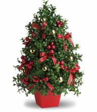 Christmas Boxwood Tree