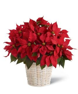 Holiday Cheer LG Red Poinsettia