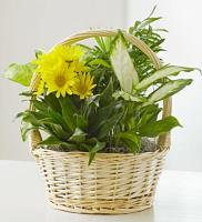 Basket Garden with Fresh Cut Flowers